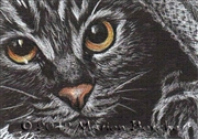 ACEO-46-cat-eyes